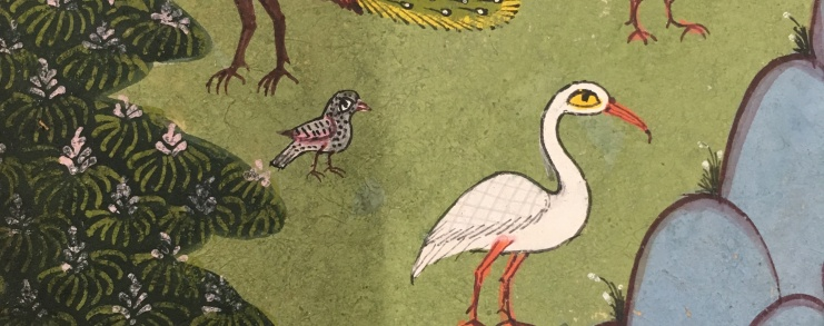 close up of birds in a garden